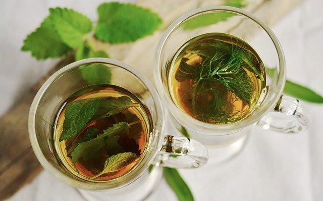 cuales son plantas medicinales